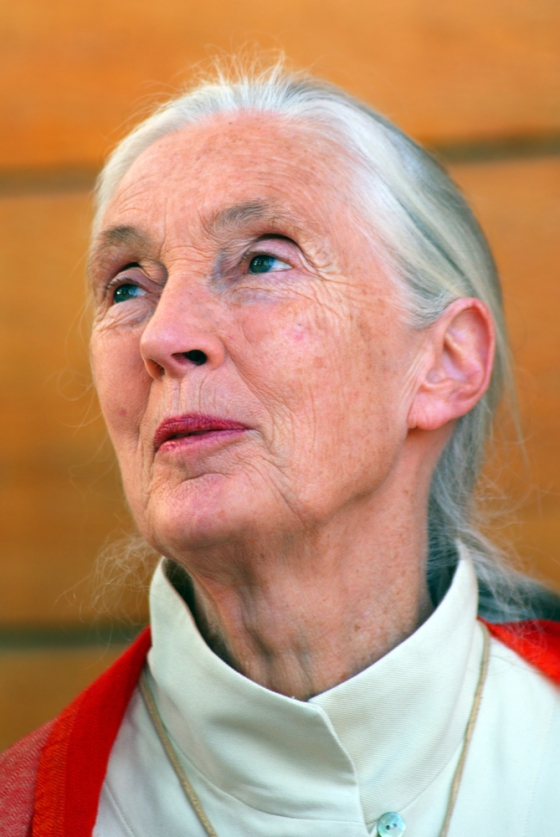 Jane Goodall giving a lecture about chimpanzees