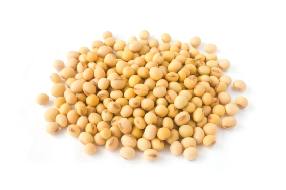 soybean isolated a white background