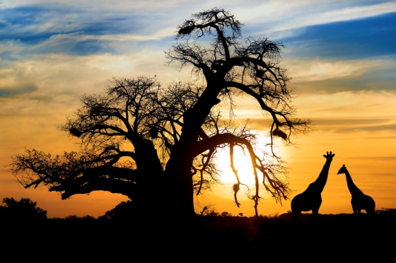 Image depicting wonderful African safari adventures