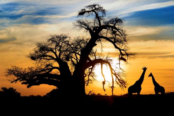 Image depicting wonderful African safari adventures