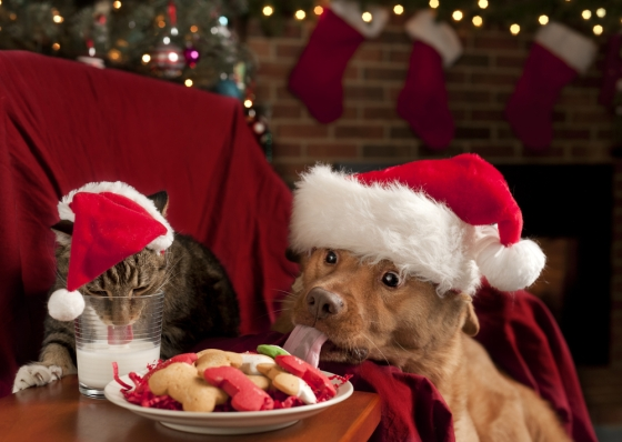 Pets enjoying their Christmas treats.